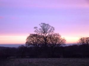 Dawn 3 - Constable Burton 6th December 2012