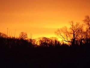 Dawn 7 - Constable Burton 6th December 2012